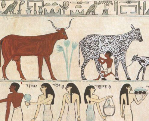 storia della domesticazione