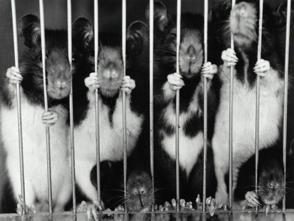 Sui diritti animali