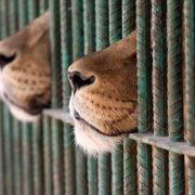 chiude lo zoo di buenos aires