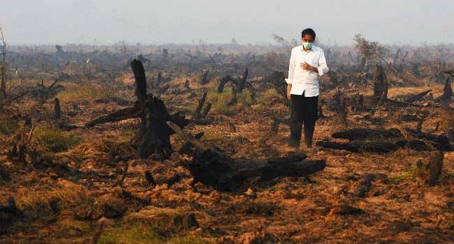 olio-di-palma-indonesia-presidente-1
