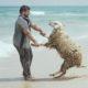 una pecora in spiaggia multa
