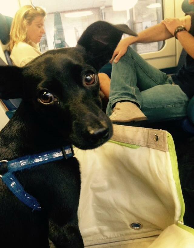 Cani in treno a 5 euro