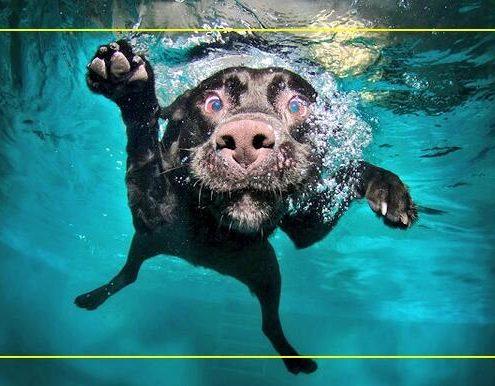 piscine per cani Bari Padova