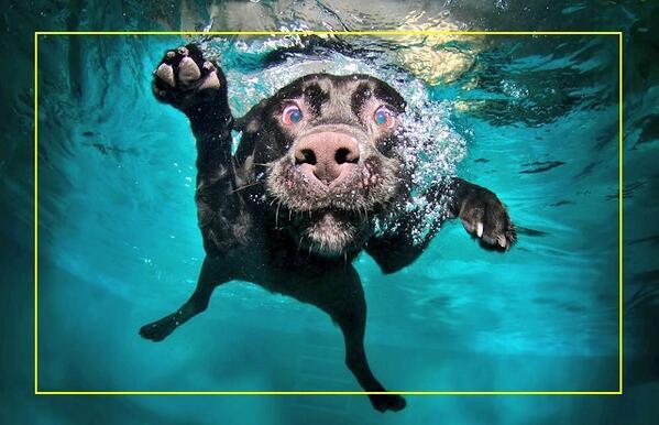 piscine da cani Bari Padova