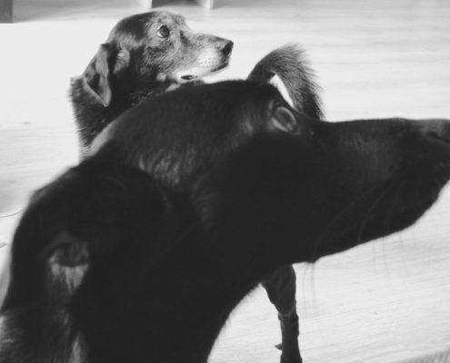 Cosa ci insegnano gli animali non umani