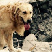 Cani eroi: Dayko