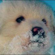 Cani di Rigopiano sopravvissuti