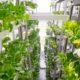 Fattoria verticale vegana Metropolis farm