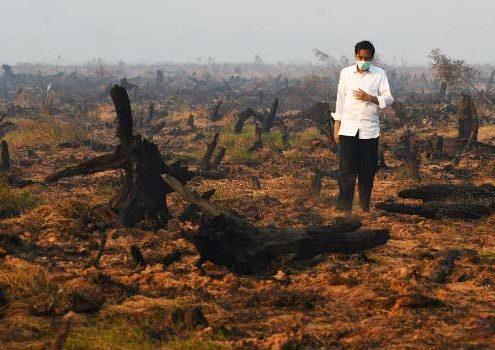 5 cose da sapere sull'olio di palma