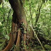 spie salva foresta