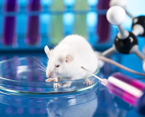 paradosso sperimentazione animali