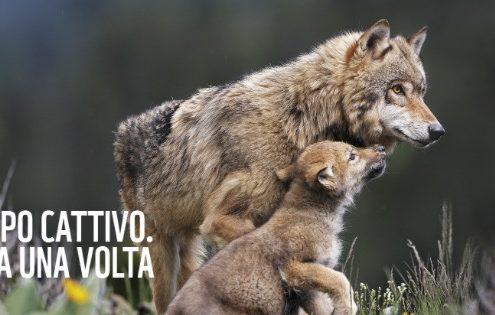 Piano lupo #soslupo