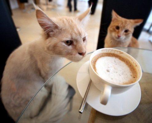 Cat cafè italiani