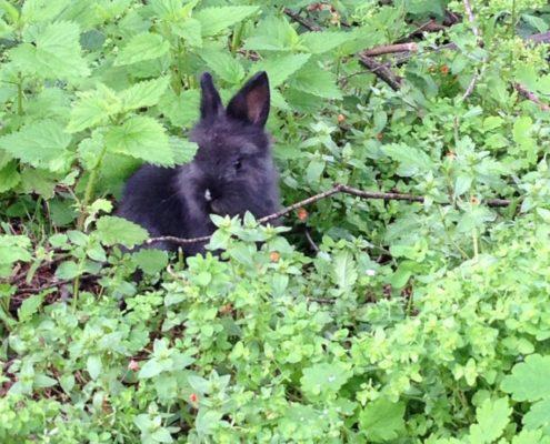 Stop ai conigli in gabbia